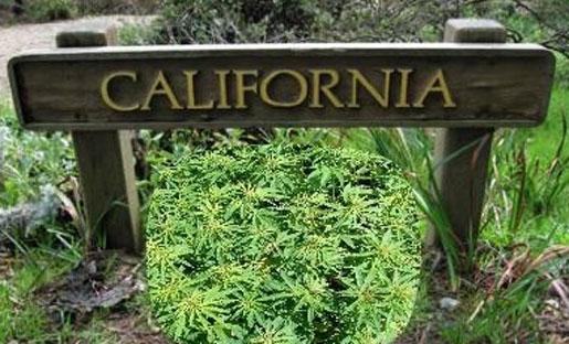california-marijuana-proposition-19