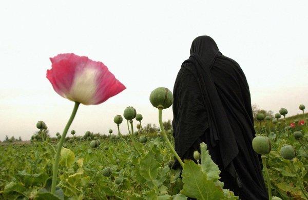 med_an-afghan-woman-in-nangahar-province-harvests-opium-in-a-poppy-field-kate-brooks-jpg