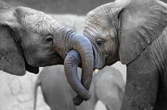 a.baa-realy-elephant-love
