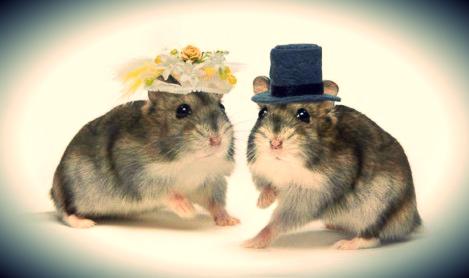 animales-casados-02-469x278