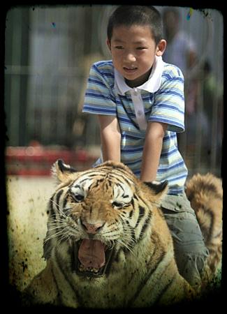 circo-tigre-bambino