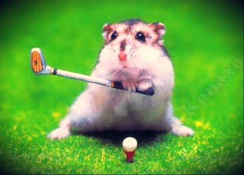 criceto-con-mazza-da-golf