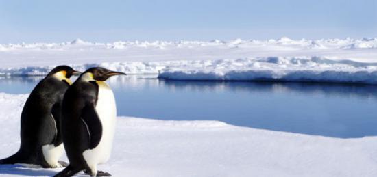 destinazione-antartide-alla-scoperta-dell-habitat-naturale-dei-pinguini_50059_550x259
