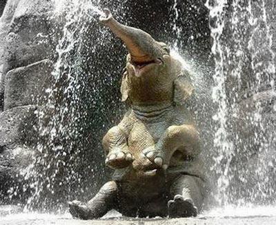 elefante-doccia