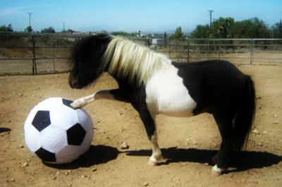 horse-and-the-ball-21267766