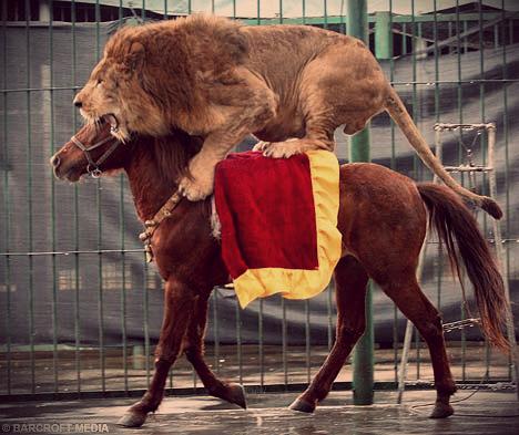 LionBAR0602_468x393