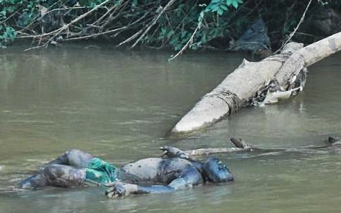 One-of-the-corpses-found-floating-on-the-Ezzu-River-480x300