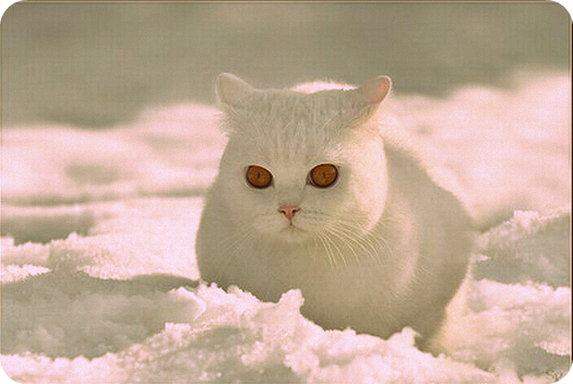 palla-di-neve