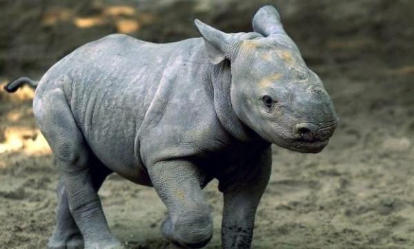 Sudafrica-aviazione-difende-rinoceronti_h_partb
