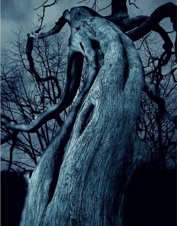 the-dark-tree