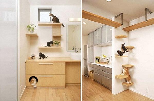 Voglio una casa a misura di gatto tuttacronaca - Voglio costruire una casa ...