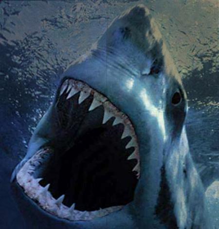squali, america, attacco
