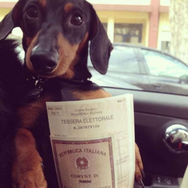 cane elettorale