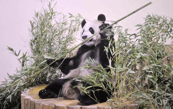 panda zoo edimburgo
