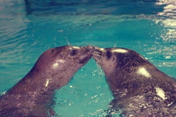 bacio_foche_2