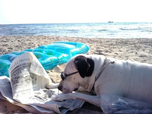 cane-legge-giornale