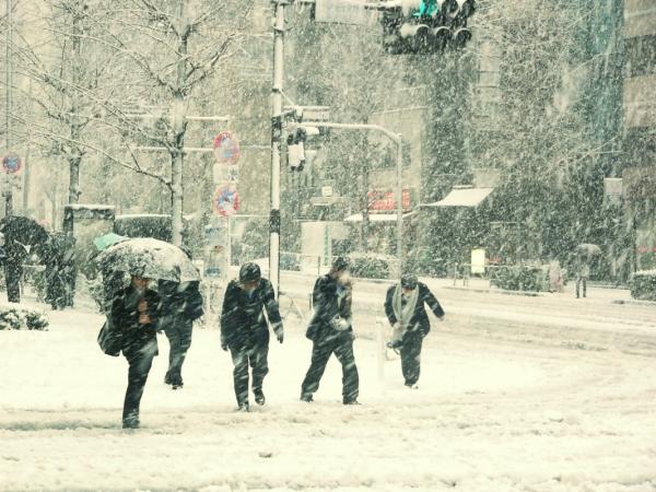 neve - fiorentino