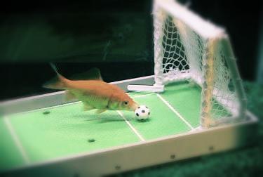 fishsoccer