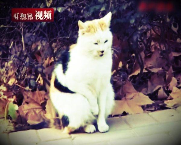 gatto_masturba2