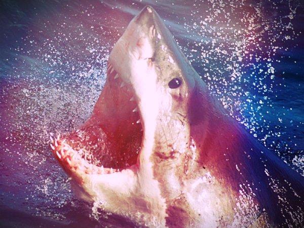 squalobianco-nuova zelanda
