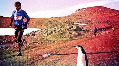 maratona-pinguini-polo sud- tuttacronaca