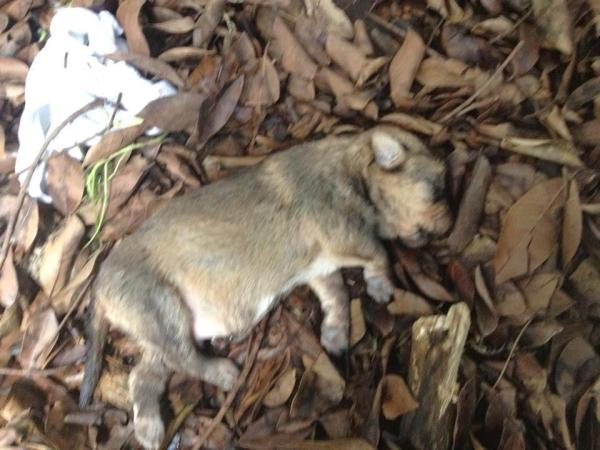 cane sassate - mondo di gio- tuttacronaca