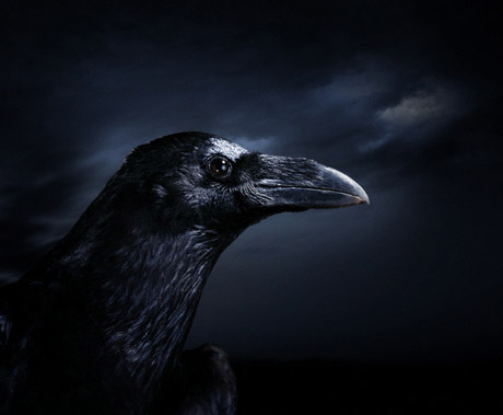 corvo-chiesa- tuttacronaca