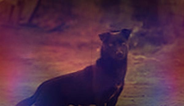 cane-salva-bimba-assideramento-tuttacronaca