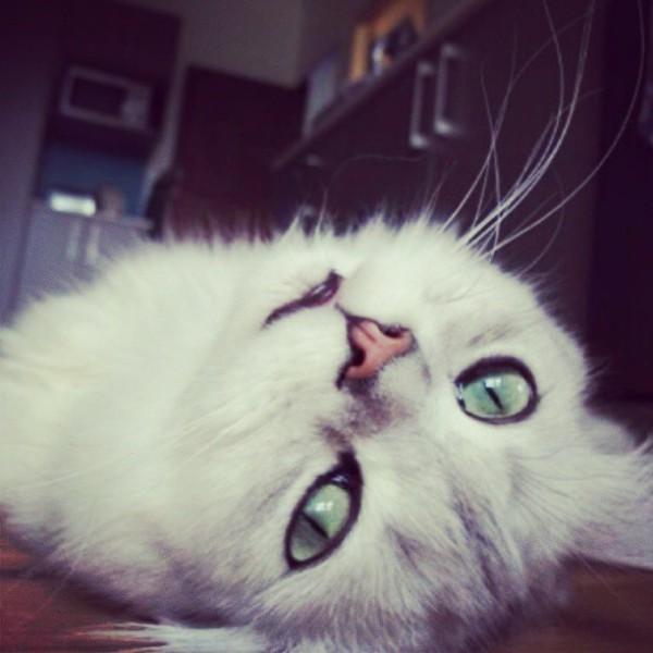 cat-gatto-gatti-divertenti-funny-kitty-tuttacronaca-video-compilation