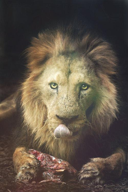 safari-leone-donna-sbranata-sesso-tuttacronaca