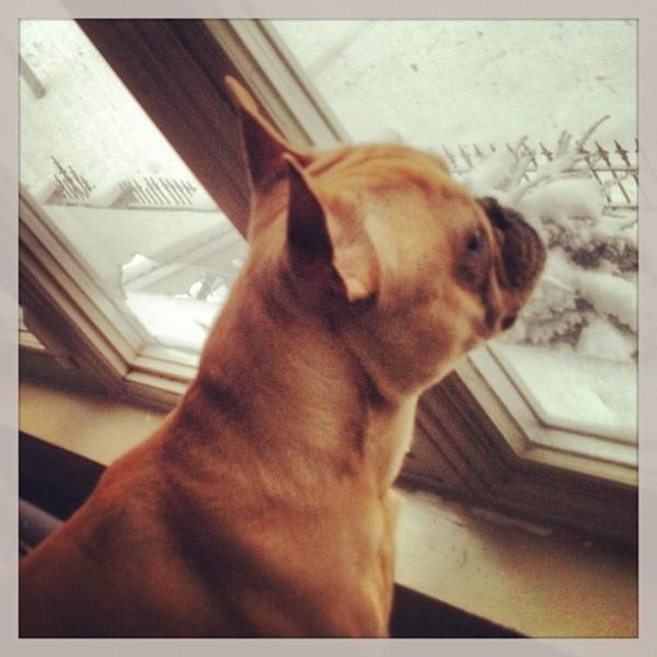 chicago-maltempo-storm-tempesta-neve-tuttacronca