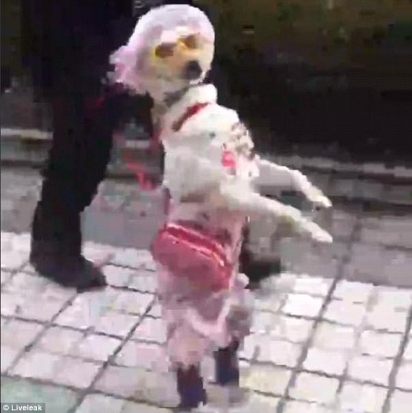 dog-dressed-woman-tuttacronaca