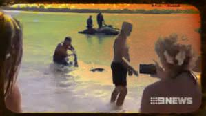 Paul Marshallsea Drags Bronze Whaler Shark Away from Noosa Beach