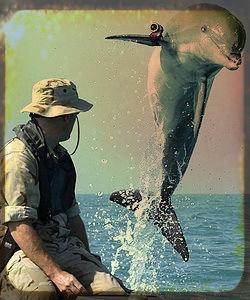 delfini-killer-ucraina-tuttacronaca