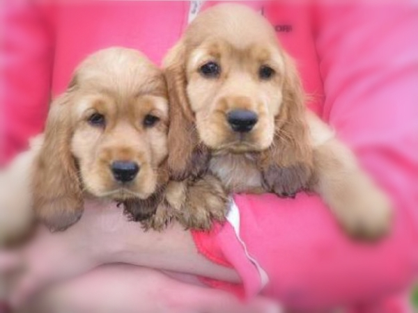 cuccioli-ungheria-tratta-tuttacronaca