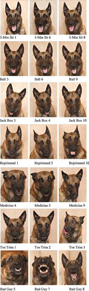 cani-segnali-animali-linguaggio-tuttacronaca