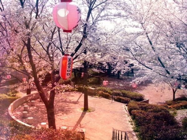 Sakura-at-the-Park-maltempo-tuttacronaca