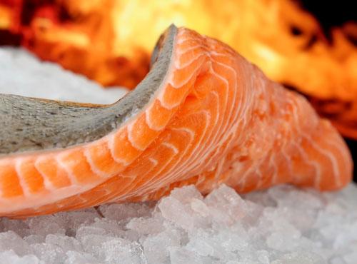 salmone-reale-fvg-tuttacronaca