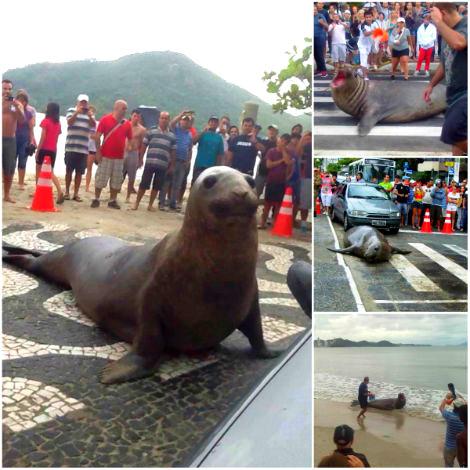tuttacronaca-sea- lion- leone-mare-brasile
