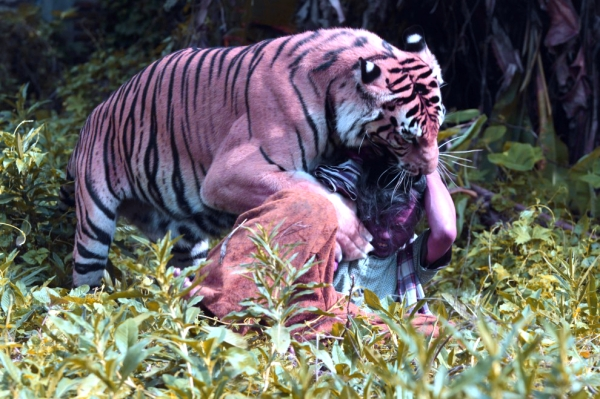 tigre-bangala-scuola