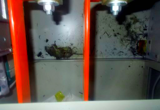 topo-ratto-fukushima-blackout-tuttacronaca