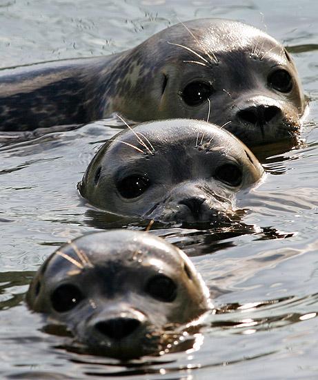 foche-san diego-protezione-animali-tuttacronaca.jpg