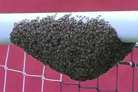 porta-brasile-calcio-partita-sospesa-api-sciame-tuttacronaca