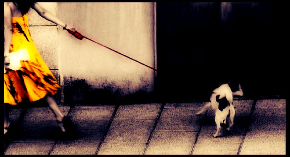 cane-passeggiata-scheletro-triestino