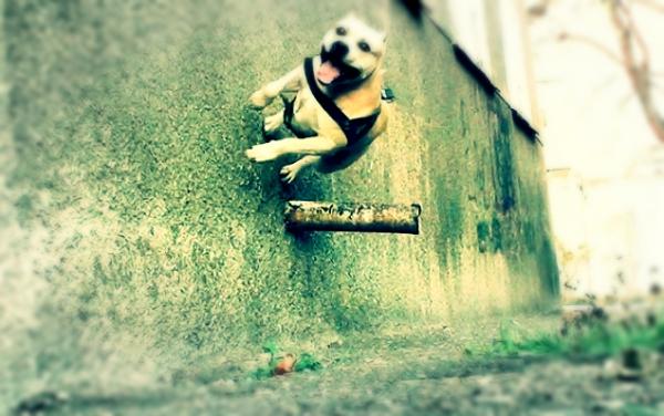 dog-tret-acrobazie-ucraina-tuttacronaca