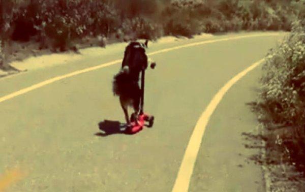 jumpy stunt dog - tuttacronaca