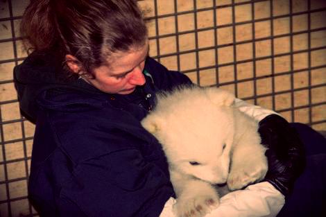 kali_bear- polar-tuttacronaca