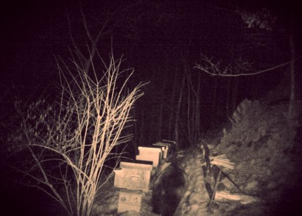 orso-lecco-telecamere-foto-apicoltore