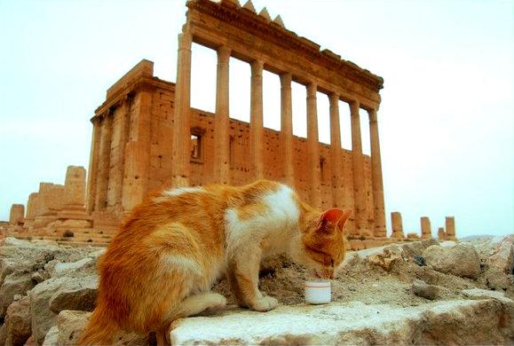 Palmira via colonnata-tuttacronaca