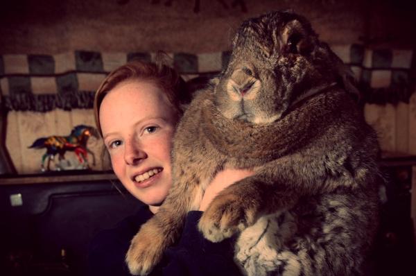 ralph-rabbit-coniglio-tuttacronaca